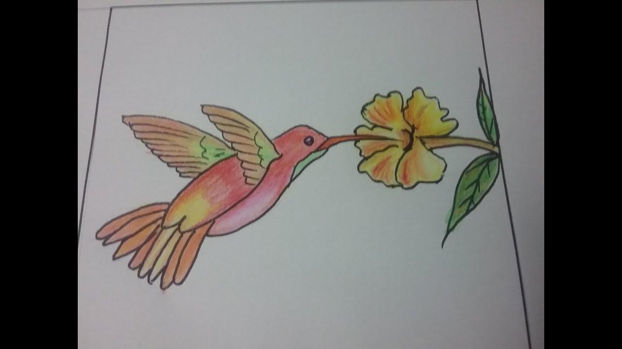 How to draw humming birdbird drawing for kids colour pencil shading of humming bird