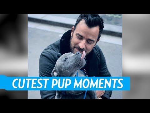 Justin Theroux's Best Moments With His Pup