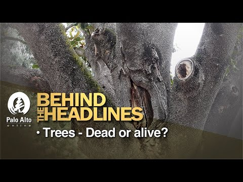 Behind The Headlines : Trees - Dead or Alive?