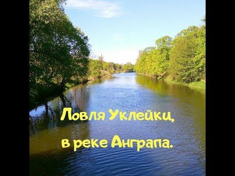 Ловля Уклейки, в реке Анграпа. Город Черняховск.