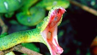 видео сонник змея во сне нападает