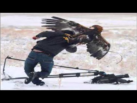 Top 7 Best Eagle Attacks (GRIZZLY,KANGAROO…& MAN) HD