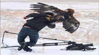 Repeat youtube video Top 7 Best Eagle Attacks (GRIZZLY,KANGAROO...& MAN) HD