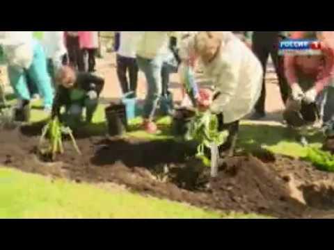 Плодовые растения в саду. Сад мечты. Выпуск 2 - YouTube