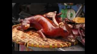 Top 10 Weirdest Foods in Vietnam