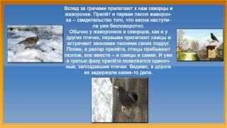 Презентация птицы весной. Презентация для дошкольников