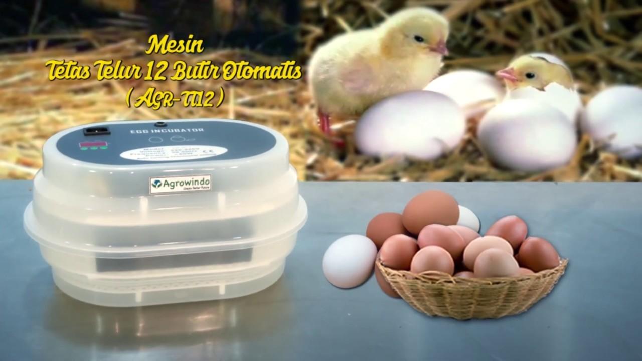 Mesin tetas telur 12 butir otomatis (AGR-TT 12)