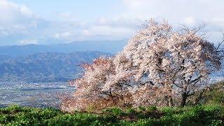 2018年4月11日発売 田川寿美さん「春よ来い」 ・作詞:石原信一 ・作曲...