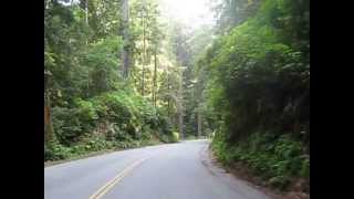 Cycling through Del Norte Coast Redwood State Park