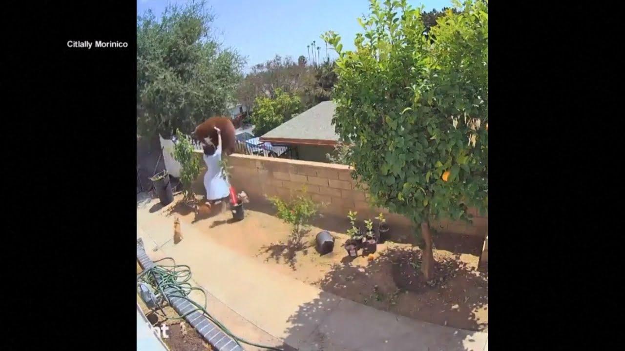 Une adolescente pousse une ourse à mains nues pour protéger ses chiens [VIDÉO]