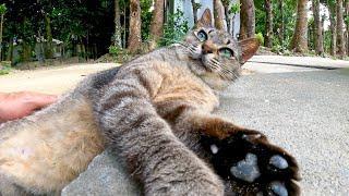 店番していた猫を撫でるとゴロンゴロン、手をニギニギしてカワイイ