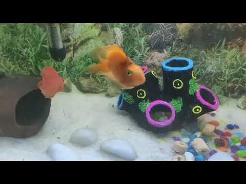 My Parrot Fish Fungs Disease Treatment