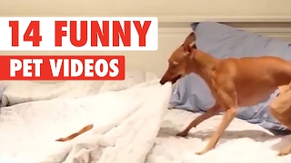 Repeat youtube video 14 Funny Pet Videos Compilation 2017