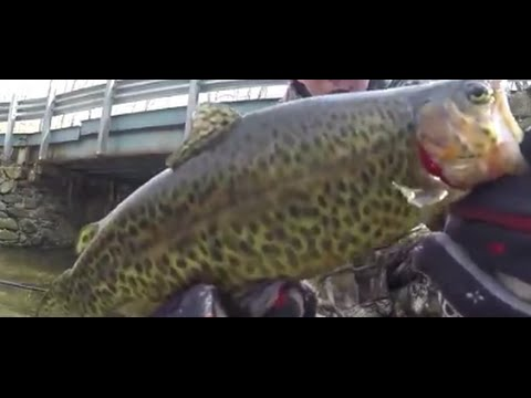 Trout fishing nj rainbow trout brown trout fly for Nj fly fishing