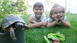 Fındık ailesi gerçek kaplumbağa ile oynuyor.