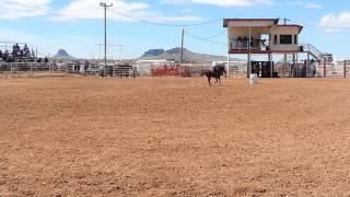 Dillon first rodeo run