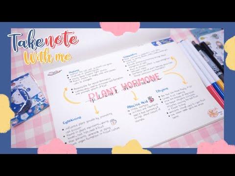 Take Note With Me EP. 24 | จดเลคเชอร์คุมโทนน้ำเงิน,แดง,เหลือง ให้น่ารัก และเข้าใจง่าย