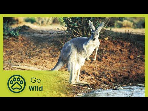 Wildest Australia -