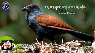 សម្លេងសត្វល្អូតធំ(ស្រុកខ្ញុំគេហៅថា អែអូតភ្លើង)-Cambodia Nature Sound Greater Coucal Calling
