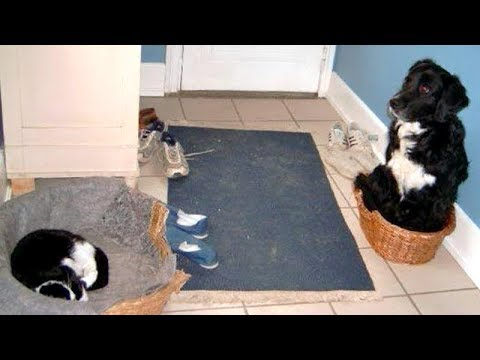 You'll LAUGH SO HARD that you'll FART! - BORDER COLLIES are the FUNNIEST DOGS