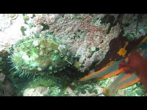 Abalone Flees Starfish
