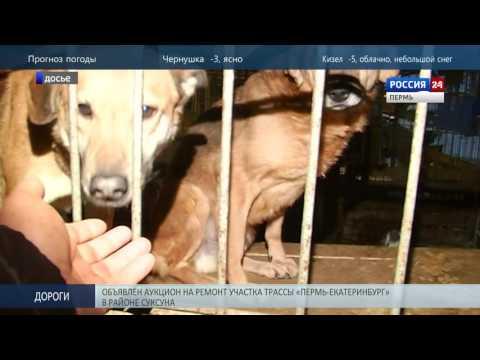 В Перми проверят муниципальный приют для животных