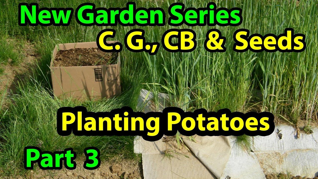 Coffee Grounds, Cardboard U0026 Seeds   No Till Vegetables Gardening Series For  Beginners 101. Pt 3