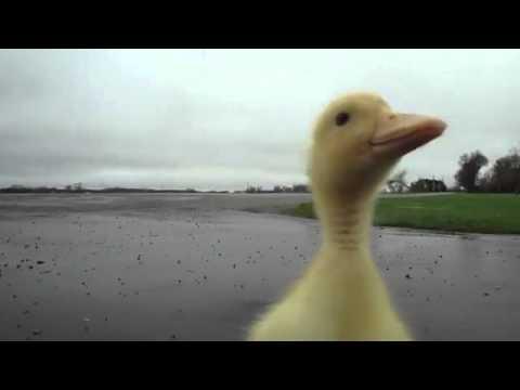 Ördek ördek değil Road Runner mübarek -)