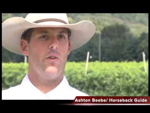 Vineyard Horseback Tours