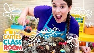 Caitie's Classroom Live - Creepy Crawly Bugs!