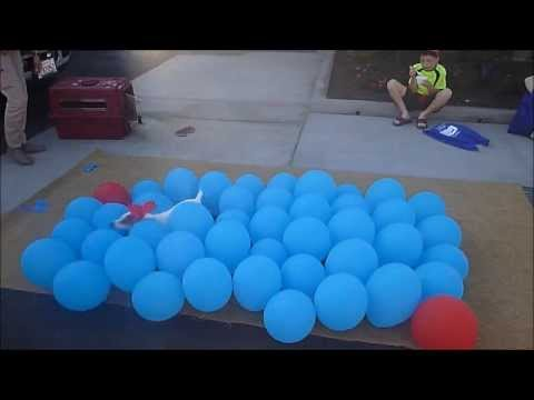 LAwithKids.com meets the Balloon Popping Dog