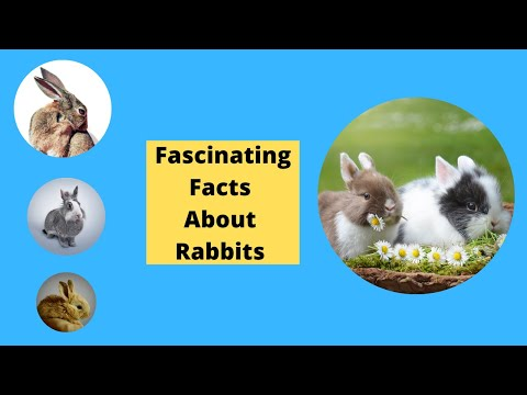 fascinating-facts-about-rabbits