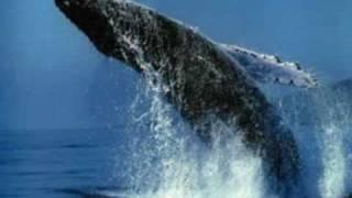 Dj Buzz - Whales (Long Version)