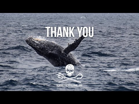 Thank You from Sea Shepherd Global