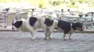 geschlechtsverkehr hunde wehen geschlechtsverkehr