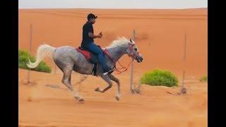 من اجمل الرحلات على الخيل في دولة الإمارات (العين) رملة النباغ