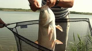 Рыбалка по-лугански ловля толстолоба