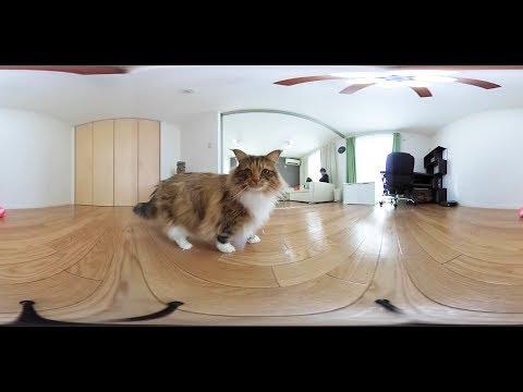 360 VR Cat Video