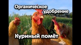 Органическое удобрение - куриный помёт.