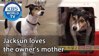 Jacksun loves the owner's mother [Dogs are incredible/ENG/2020.10.14]