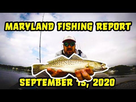 Maryland Fishing Report - Episode 017