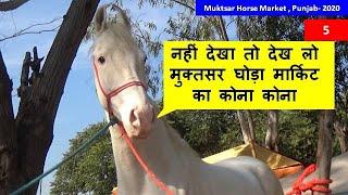 Enjoy Full Muktsar Horse Market View आनंद लें सम्पूर्ण मुक्तसर घोड़ा मंडी का - Horse Market In India