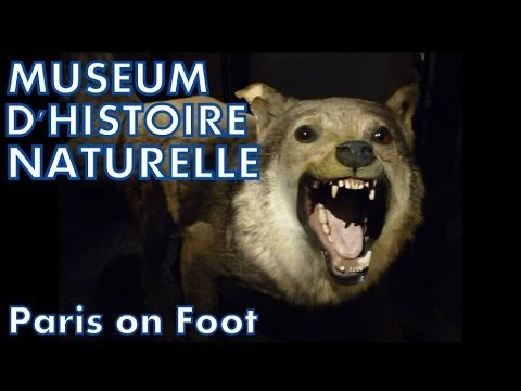 Paris on Foot #5: Museum National d