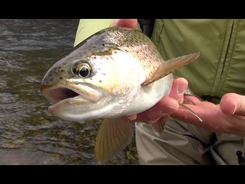 Big Sky Outdoors - Fly Fishing With Egg Patterns