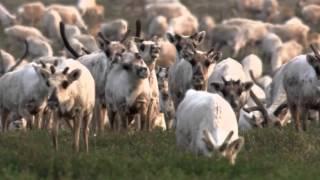 In the animal world-Animals in the North (В мире животных-Животные на Севере)
