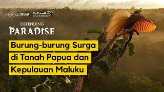 Defending Paradise: Burung-burung Surga di Tanah Papua dan Kepulauan Maluku