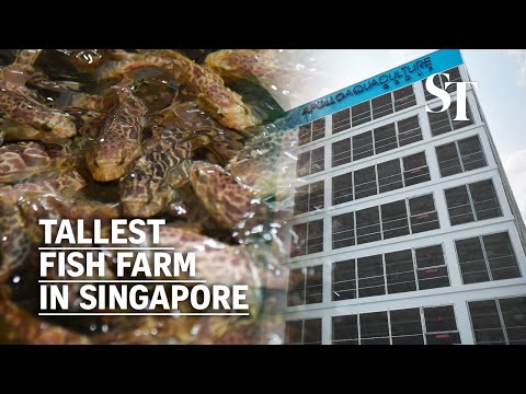 Tallest fish farm in Singapore to produce 2,700 tonnes of fish a year by 2023