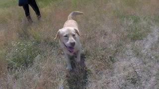 Прогулка на природе с собаками