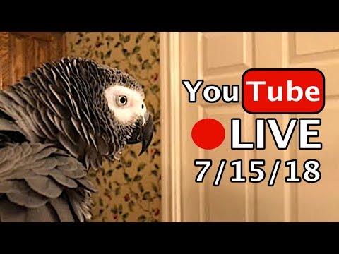 🔴🐦Einstein Parrot LIVE! 71518 Talking in the Bathtub!