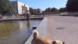 1 сентября 2016 Червоноград ускоренном виде